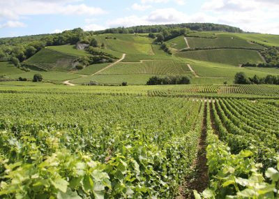 Visit of a vineyard of Champagne during a wine day tour from Paris