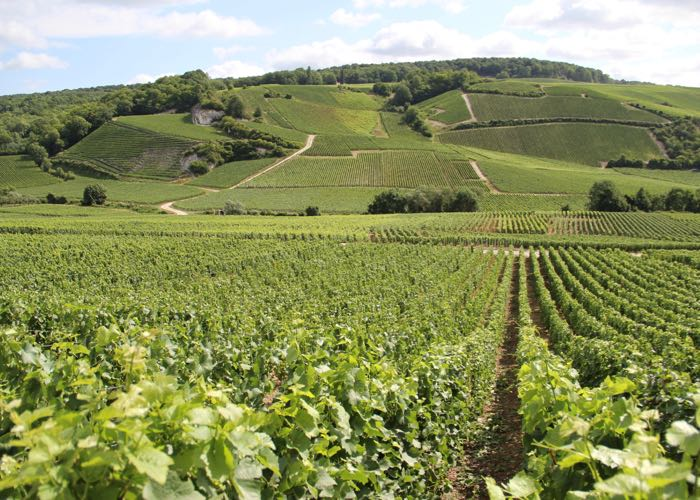 Champagne valley wine tour