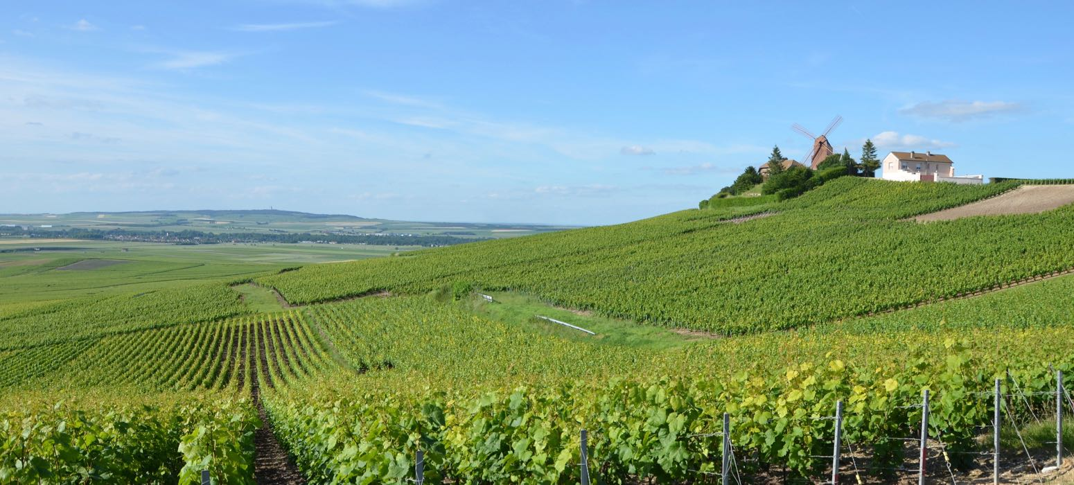 Wine day tour in the vineyard of champagne