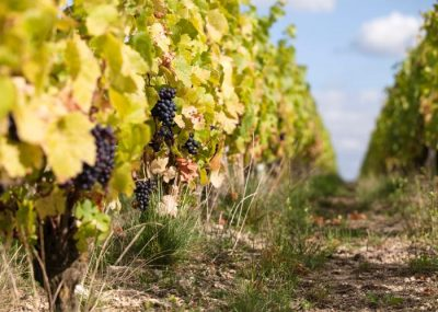 Visit of a vineyard of Loire during a luxury wine day tour from Paris