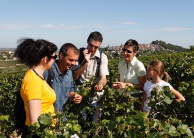 Visit of a vineyard of Loire during a private day tour from Paris