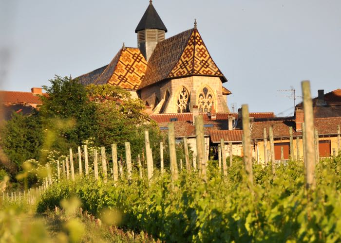 Visit of a vineyard of Loire during a wine day tour from Paris
