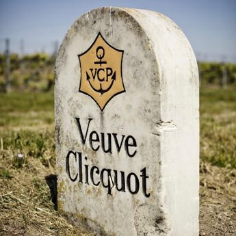 Veuve Clicquot Vineyard visit during a day tour in Champagne from Paris