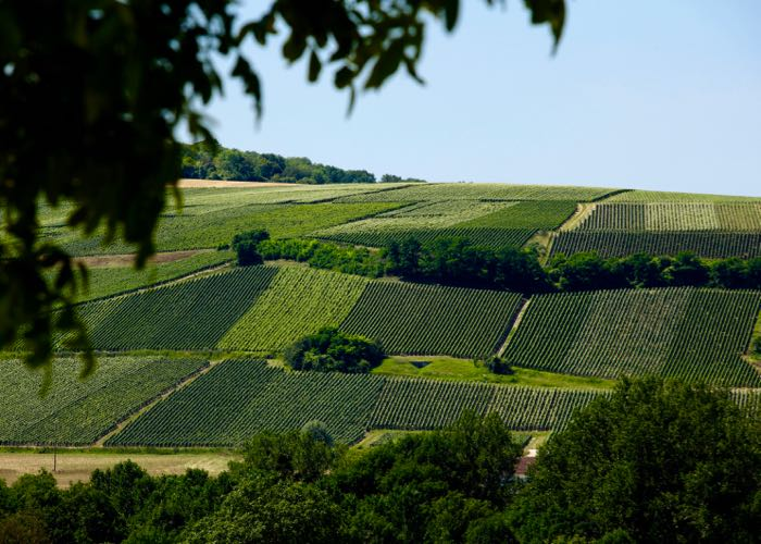 Hill of vineyard in Champagne region discovery
