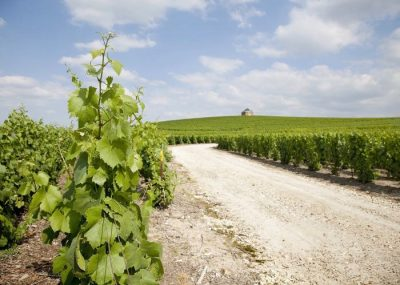 Road of Champagne in the vineyards