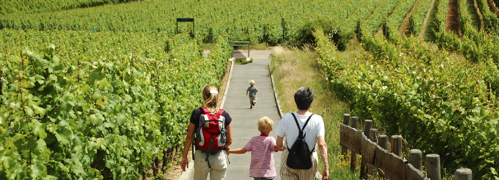Visit the vineyard with your family during a wine day tour from Paris