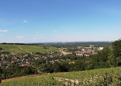 Visit of a vineyard of Loire during a private wine day tour from Paris