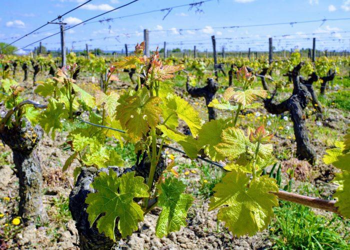 wine-tour-from-paris-loire-valley