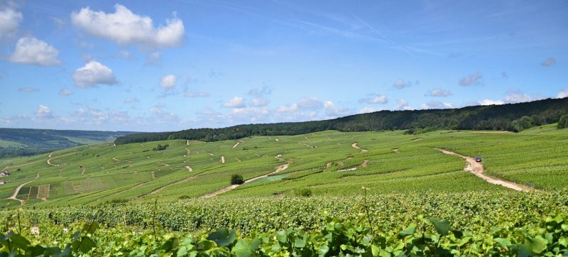 Landscape of vineyards from champagne, The greatest players of Champagne's history