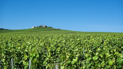 vineyard from champagne with the mill, The greatest players of Champagne's history