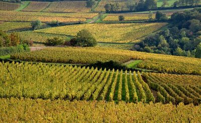 vineyard, Wines and Castles: must-know about the Loire valley