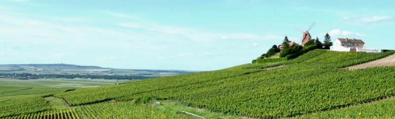 Visit Champagne region Champagne Day Trip from Paris My Winedays