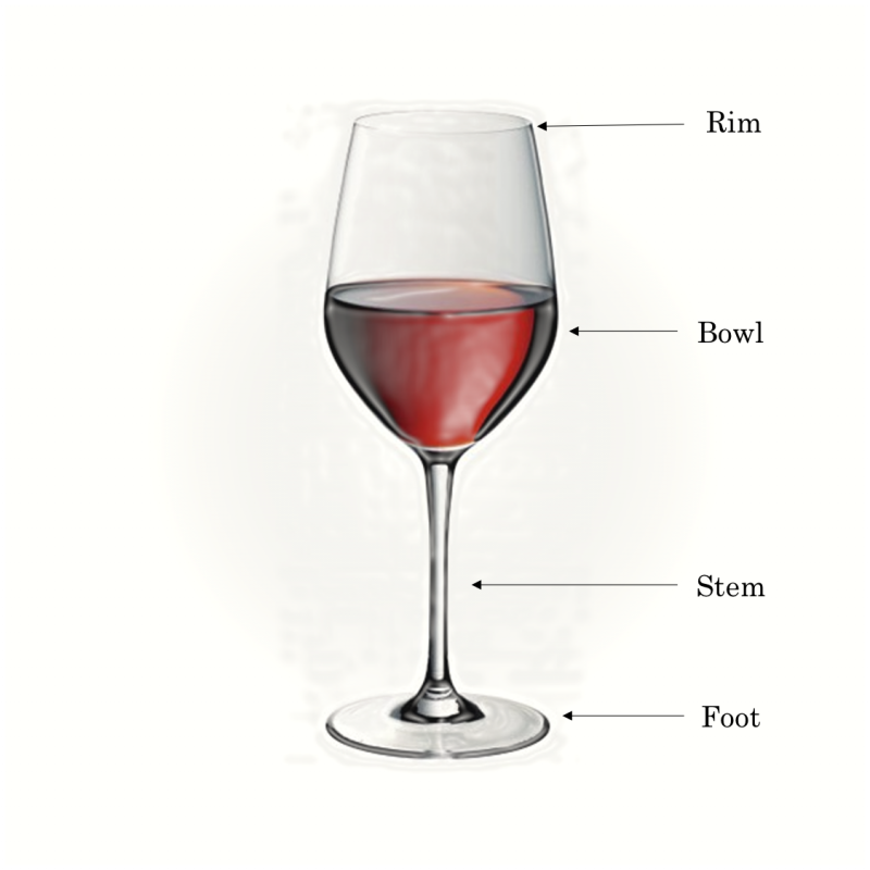 Structure of a wine glass