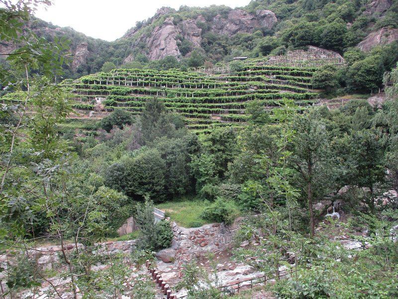 Vallée-d'Aoste-(vignoble)-056.jpg